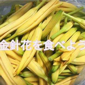 【台湾】金針花(忘れ草)を食べよう!