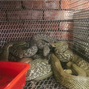 【台湾】蛇をたべよう!オススメの蛇肉湯(ヘビのスープ)