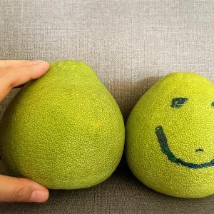 【台湾】秋の定番フルーツ!柚子(ヨウズ)と呼ばれている台湾の文旦