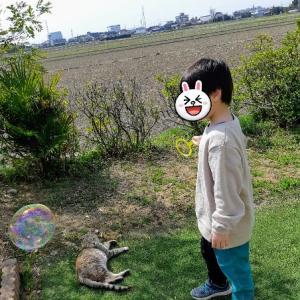 野良猫とシャボン玉