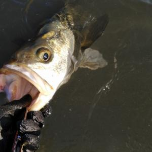 【シーバス2019】瀬を釣る