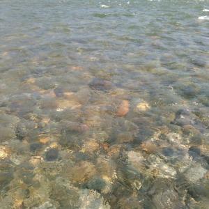 【鮎2019】魚野川、復活の兆し