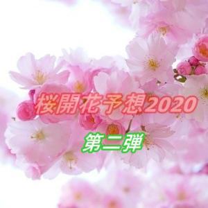 「桜開花予想2020」第二回目が発表!東京上野恩賜公園の開花予想時期はいつ?