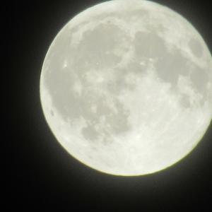11月 月齢 満月(2)
