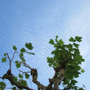 ある日の鱗雲