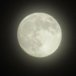 5月 月齢13.7 満月前夜♪