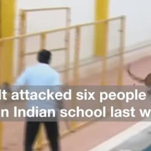 インドの学校で暴れまわるのは・・・