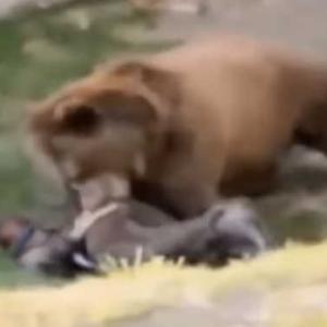 【衝撃事故】野生動物が人間を咬み潰す瞬間13連発 身の毛がよだつ恐怖映像 ボロぞうきんのように扱われる人間に心臓が縮み上がる