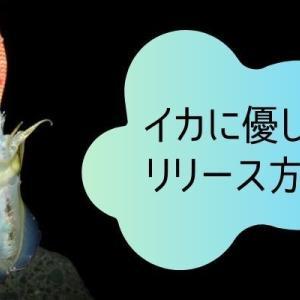 【エギング】イカの生存率を下げないリリース方法!