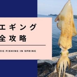 【エギング】春イカは藻場攻略がポイント!シャクリ方やコツを徹底解説!