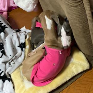 ボリカの美容液アイシャドウ(  ー̀ωー́ )وじゃれる子犬とママのハイセンスなお買い物(笑)