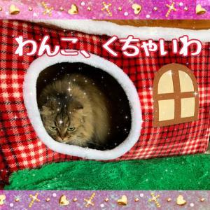 ジルスチュアート☆クリスマスコフレ!うさぎわんこ!パート①⸜(。•ω•。)⸝