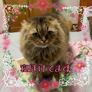 24hコスメ★ミネラルリップ( ̄▽ ̄)猫じゃらし大会とイタグレマザコンたち