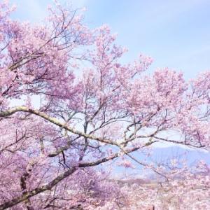 第一回「宇多田ヒカルとまふまふさんの共通点」