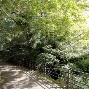 京都ぉ〜おおはら、さんぜんいん!に行ってみたの巻