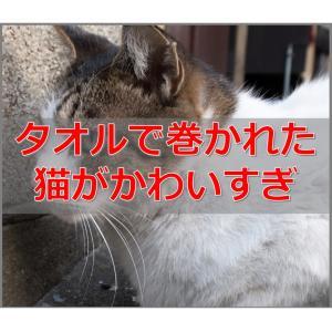 【かわいい】海外で話題となっていた猫巻き(PURRITOS)の紹介!