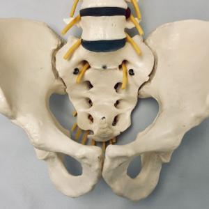 骨盤の歪み方には、沢山の種類の歪み方があるのです。