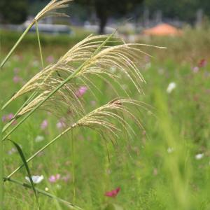 今年の暑さは雑草天国か。実験結果