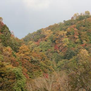 10月は紅葉シーズンイン