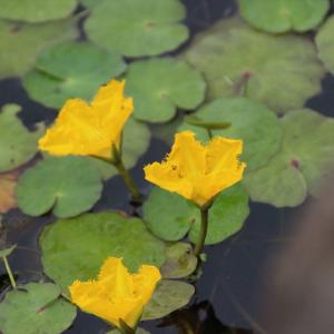 宝積寺グリーンパークの花々