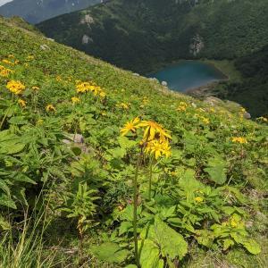 夏の花咲く日光白根山:山の日登山