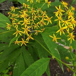 似て非なる花4
