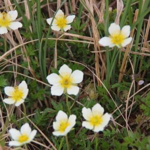 花咲く田代湿原