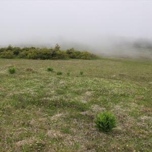 霧の勢いが凄い