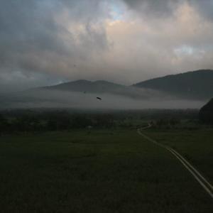 湿原の朝は霧がいいですね。