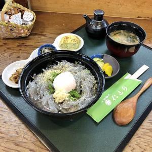 生しらす丼の夏、堺の夏、山海料理 仁志乃(堺市西区)