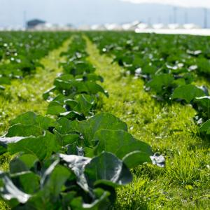 新規就農するための検討項目