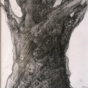 「樹」 2021.3.16