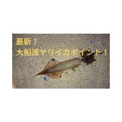 【最新】大船渡でイカが釣れているポイントはここだった!!
