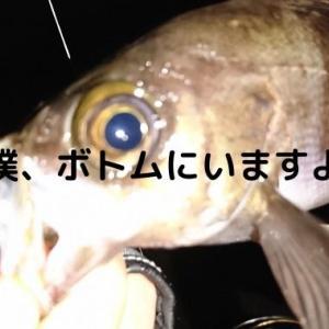 【2020冬】大船渡のメバルは元気でした!いつものポイント釣行!!