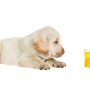 ラブラドールに犬用サプリメントの必要性と効果は?