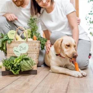 犬に野菜の摂取は必要?その効果と効率よく採る方法とは?