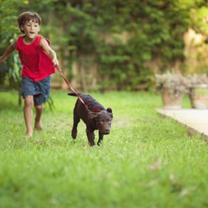 ラブラドールの散歩のしつけ方!引っ張る犬はどうしたらいい?