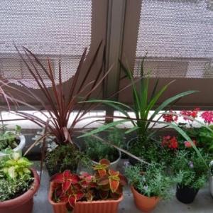 植物が好き・・・