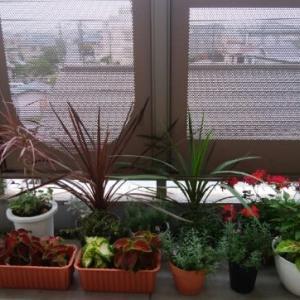 植物だけじゃなく、たまには、短歌の話も・・・