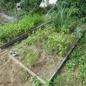 5日の芋掘りと草刈り