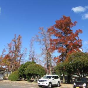 岡山県総合グラウンドの黄葉