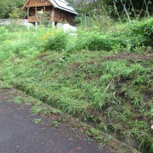 朝一で草刈り