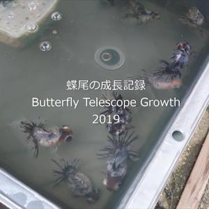 蝶尾の成長記録2019