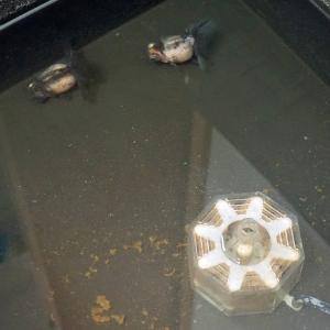 屋内飼育でも微生物は存在するが種類は少ない!