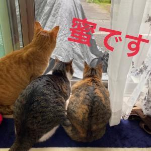3蜜ニャン(=^ェ^=)