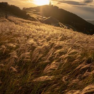 【2019年版】和歌山のススキの名所「生石高原」|見頃やアクセスなどを紹介!