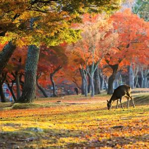 【2019年】奈良の紅葉スポット「奈良公園」|見頃や見どころ、アクセスなどを紹介!