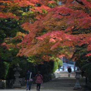 【2019年版】和歌山の紅葉スポット「高野山」|見頃やライトアップ、アクセスなどを紹介