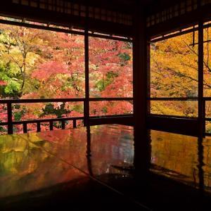 【2019年版】京都の紅葉スポット「瑠璃光院」|見頃やライトアップ、混雑情報、アクセスなどを紹介!