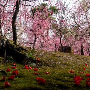 【2020年】京都のしだれ梅の名所「城南宮」|見頃やアクセスなどを紹介!